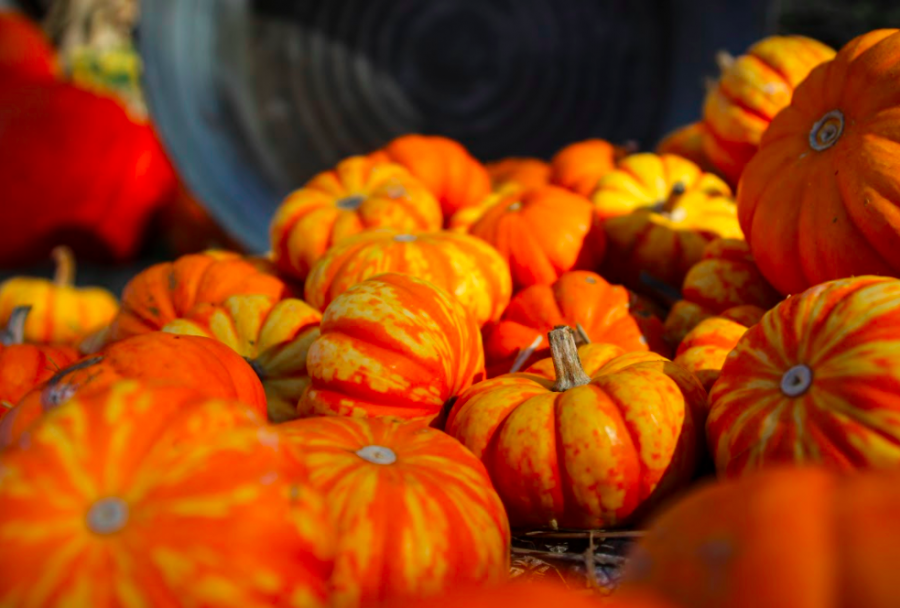 In honor of national pumpkin day (Oct 26) The Booster Redux staff has been working on several projects that include everything pumpkin. Scroll through to see history, taste and adventures, enjoy!