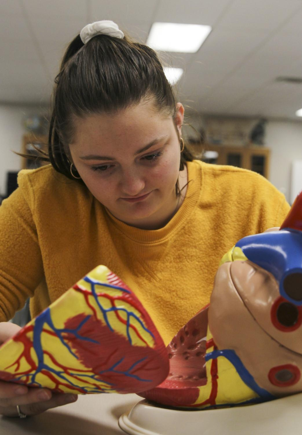 Junior Sofie Cummins studies a model heart for her health science class. Cummins is participating in Girard Youth Leadership through a program for health science at the medical center.